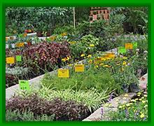 Plantones de olivos baratos best olivo arbequina olea for Viveros baratos