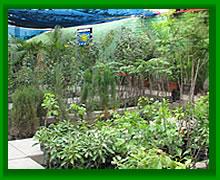 Cv unalm plantas forestales for Plantas forestales
