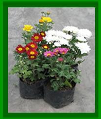 Cv unalm plantas ornamentales for Ver plantas ornamentales